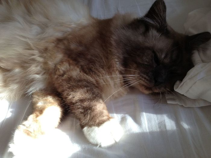 Chaton ❤ Cat