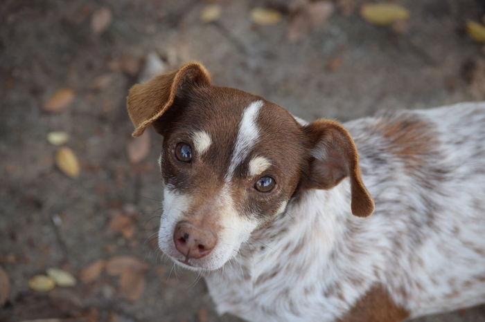 Close-up Dog Pets Chawawa Dogs Dog Love Dog❤ Dogs Of EyeEm Dogslife Dog Portrait