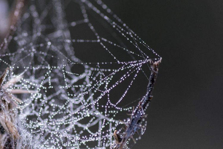 Close-up of wet spider web against black background