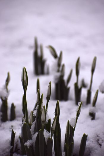 Close-up of flowering plants during winter