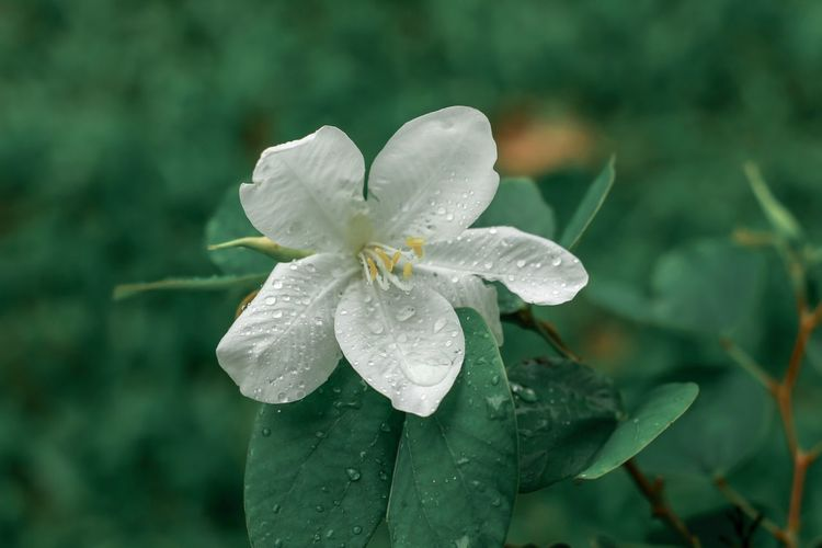 Close-up of wet flower on plant