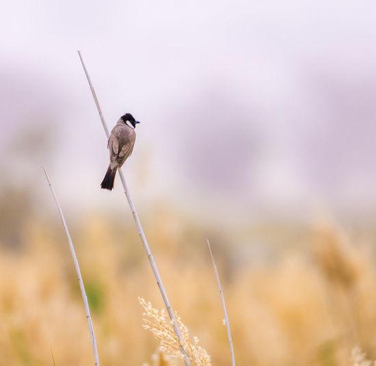 bird Bird Flying Bird Of Prey Animal Themes Sky Close-up