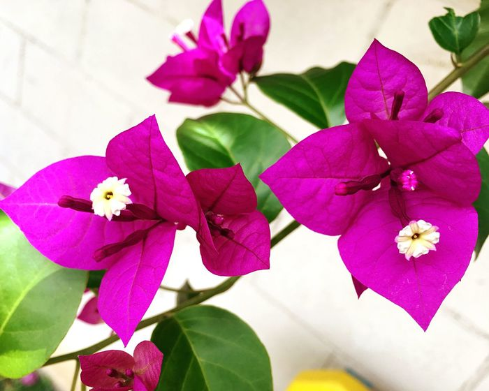 Flower Petal Beauty In Nature Nature Plant Pink Color Day Hobby