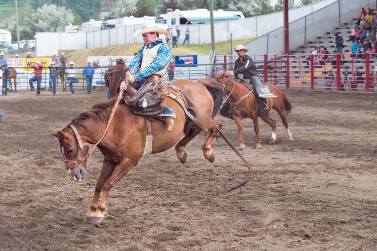 Williams Lake, British Columbia/Canada - July 1, 2016: cowboy rides a bucking horse during a saddle bronc competition at the 90th Williams Lake Stampede, one of the largest stampedes in North America 90th Williams Lake Stampede Arena British Columbia, Canada Canadian Professional Rodeo Association Cowboy Man Rodeo Travel Action Bronco Bucking Bronco Bucking Horse Candid Competition Dangerous Documentary Editorial  Extreme Sports Horse Outdoors Professional Rodeo Riding Saddle Bronc Stampede Tourism