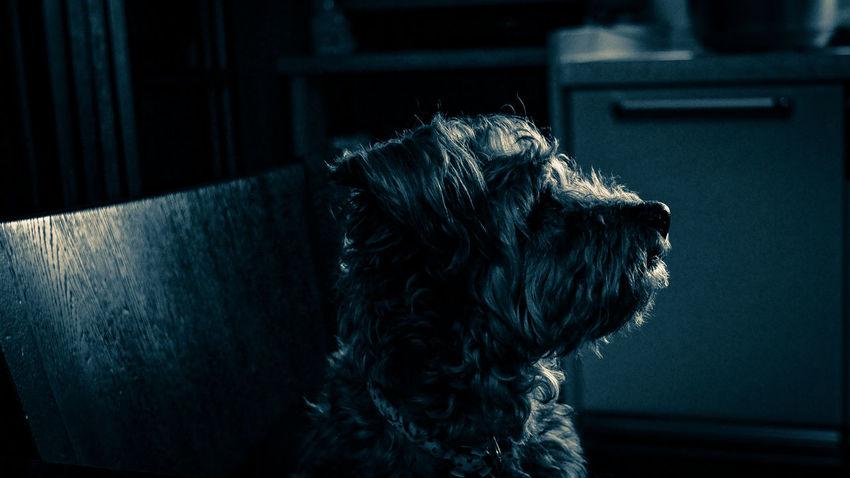 Dog Pets One Animal Animal Themes Day Domestic Animals Indoors  Takumar 28mm F3.5 Nex5