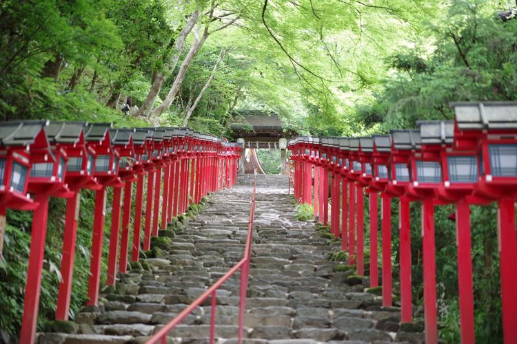 Footpath amidst lanterns at kifune shrine