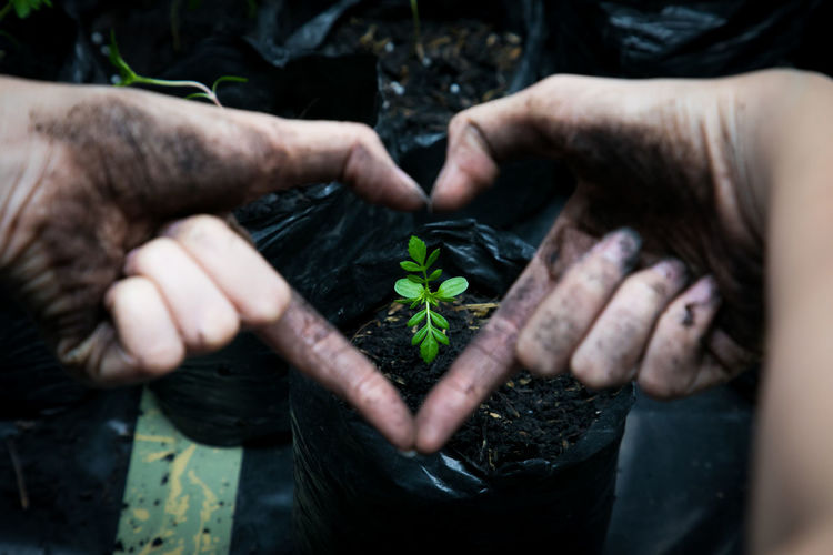 Close-up of person making heart shape with hand against seedling