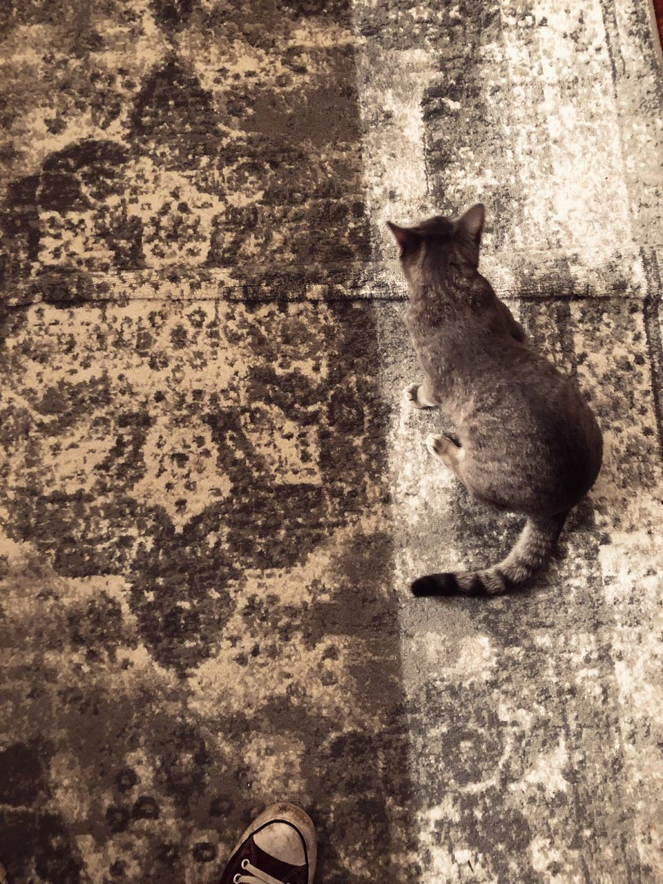 HIGH ANGLE VIEW OF CAT SITTING ON CITY STREET
