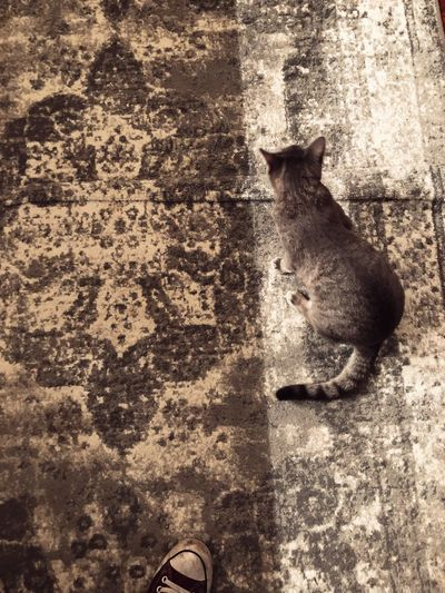 High angle view of cat in city