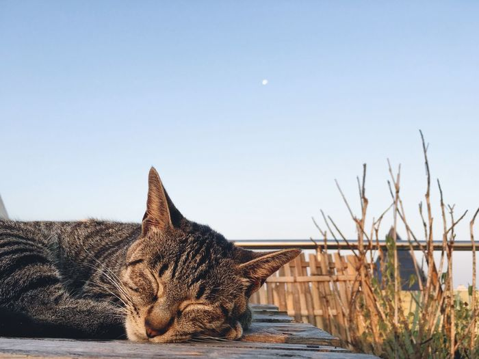 Close-up of cat sleeping against clear sky