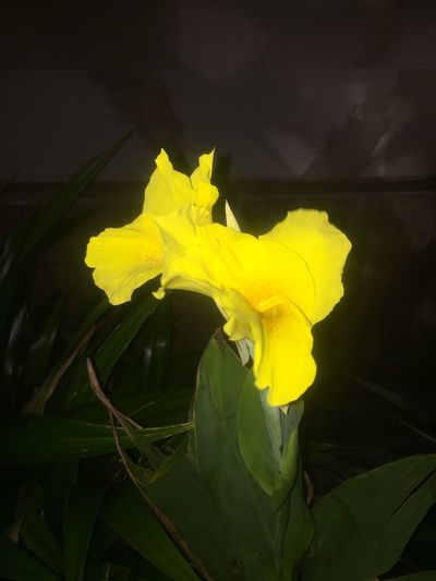 😘 Yellow