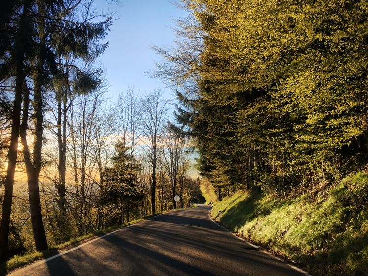 Grass Tree Road Nature The Way Forward Autumn Beauty In Nature Sunlight Forest Growth Outdoors Tranquility No People Scenics Day Sky Bare Tree Landscape Clear Sky Photographing Sunset Austria Salzburg