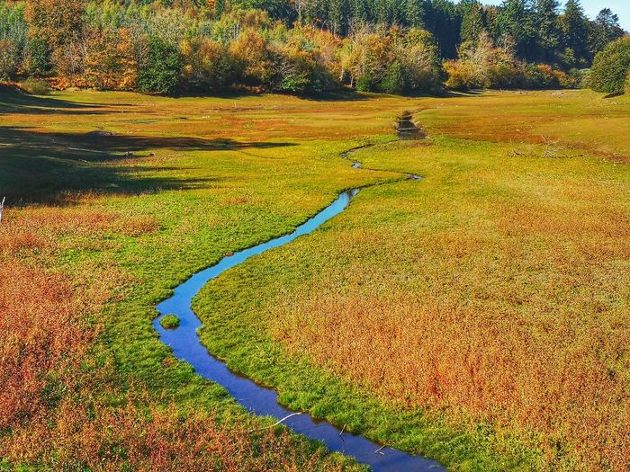 High angle view of trail on field during autumn