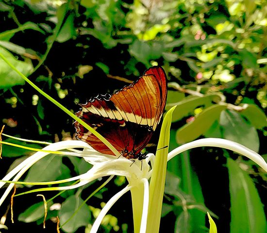 Insect Butterfly - Insect Leaf Animals In The Wild Plant Growth One Animal Nature No People Animal Themes Fragility Butterfly Beauty In Nature Close-up Outdoors Day Flower Freshness Flower Head Perching EyeEmNewHere