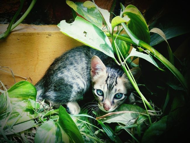 One Animal Mammal Cat Curiosity Animal Themes Mobile Photography Lenovo_k3 Whisker I_own_this_post Domestic Cat Pets Close-up Hiding Out Cats Of EyeEm Whiskers