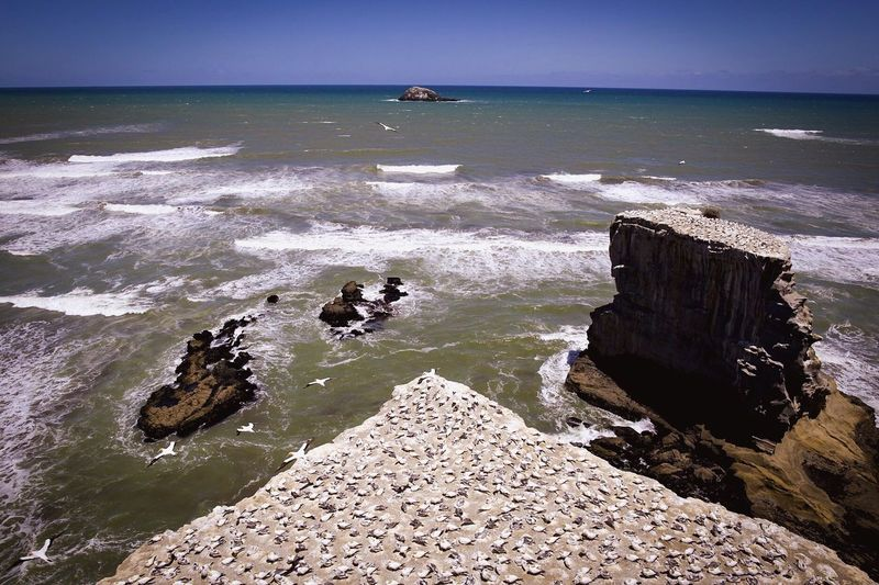 Muriwai Gannet Colony Sea Water Horizon Over Water Nature Beauty In Nature Beach Scenics Rock - Object Day Sky Outdoors Tranquil Scene No People Tranquility Wave Animal Themes Bird Gannet Colony New Zealand Muriwai Beach