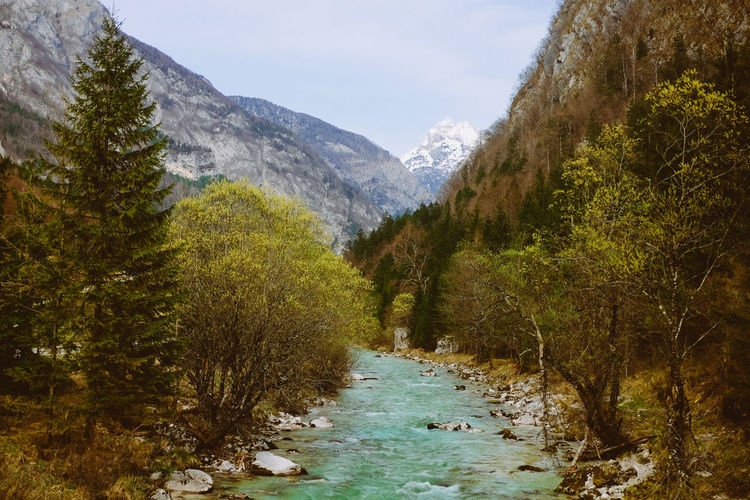 River and nature with mountain in the background Beauty In Nature Day Forest Landscape Mountain Mountain Range Nature No People Outdoors River Scenics Sky Snow Tranquil Scene Tranquility Tree Water