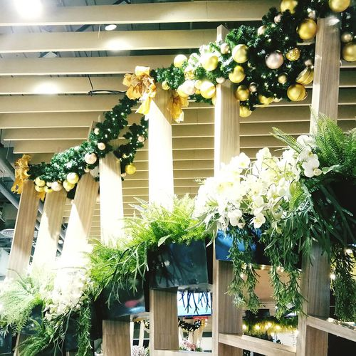 small tree Warm Light Garden Lath The Room Is Divided With Tree Decorate With Flower No People Decorate With A Tree