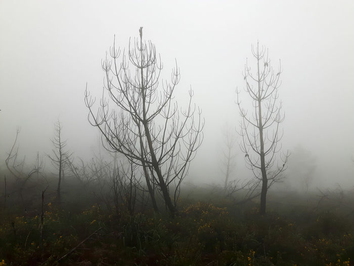 Fog Plant Tree Land Nature Tranquility Tranquil Scene Beauty In Nature No People Scenics - Nature Sky Environment Non-urban Scene Landscape Day Growth Field Outdoors Twilight Hazy  Smog Pine Tree Mist Misty Morning Misterious Burned Burn