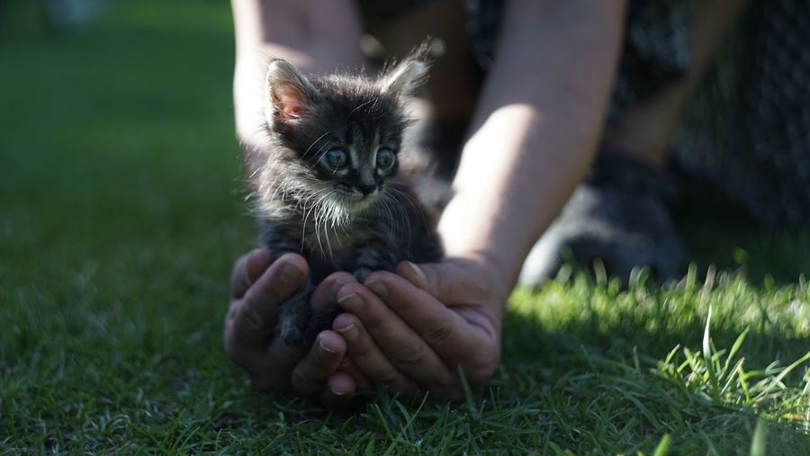 Person Holding Kitten