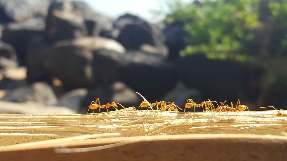 Together Beach India Ants Naturephotography Travelphotography Animals Nofilter Travelpic Wanderlust Animal Beach Nature Animal Themes EyeEmNewHere EyeEm Ready