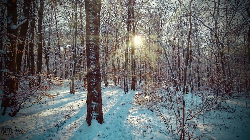 Winter Wald