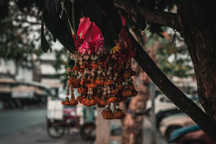 Close-up of wilted floral garland hanging on tree