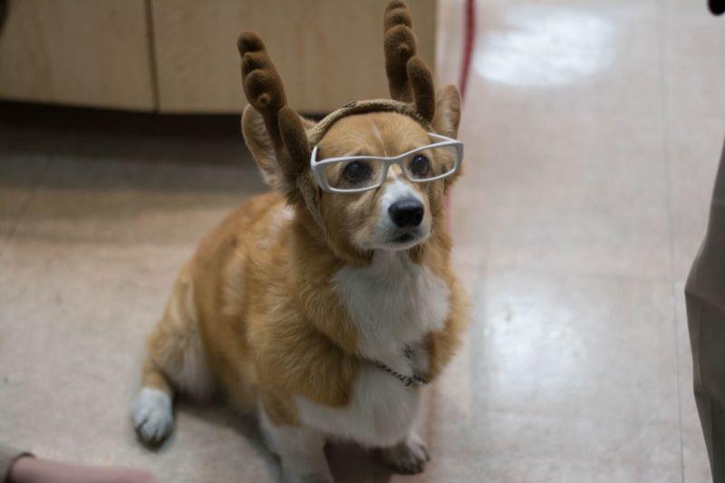 Portrait of dog wearing glasses