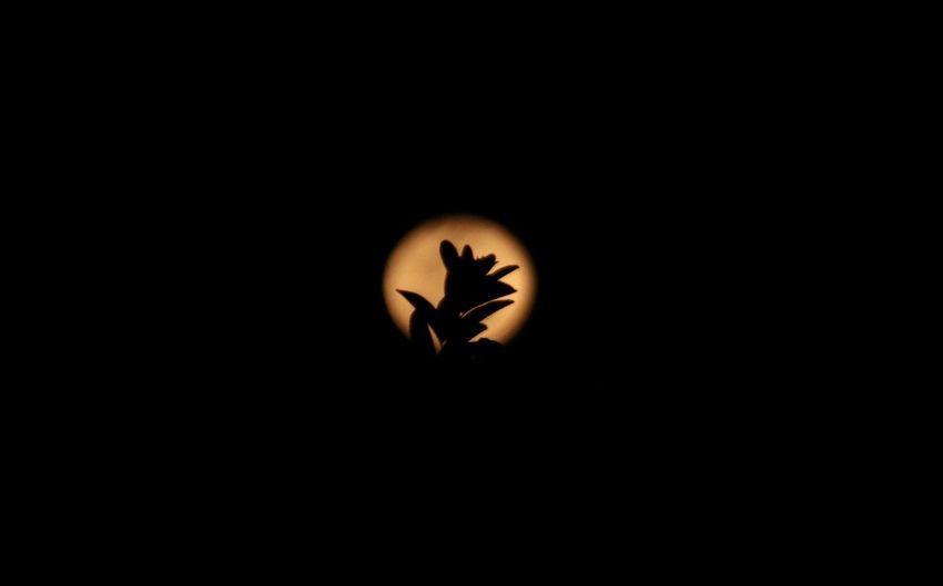 Silhouette of bird against black background