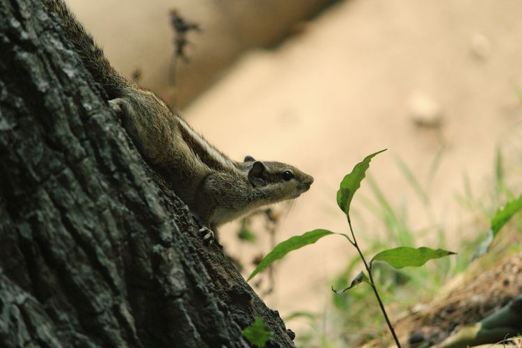 Enjoying Life Relaxing Moments Squirrel Saturday Bokeh Canon Eos  Cute Animals