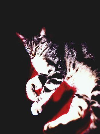 No Edit/no Filter I swear My Cat Evil Cat