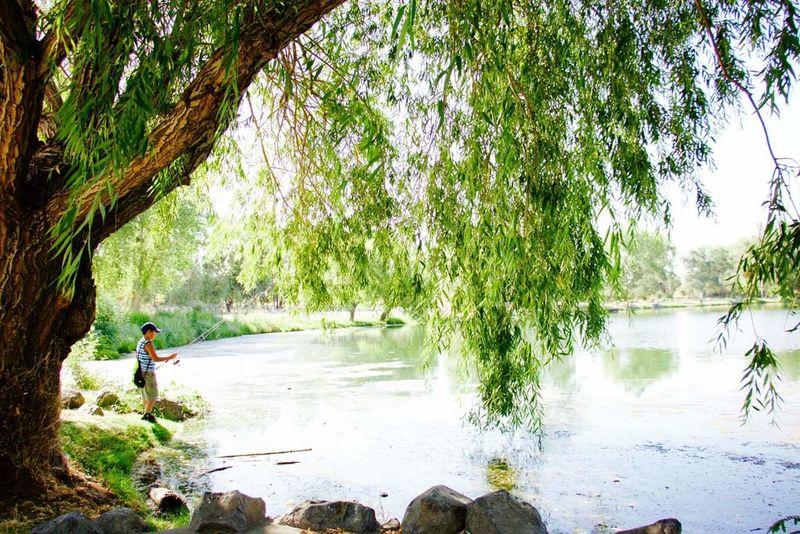Fishing Boy Pond Tree Nature Happyday Oroville Son Myson Myworld
