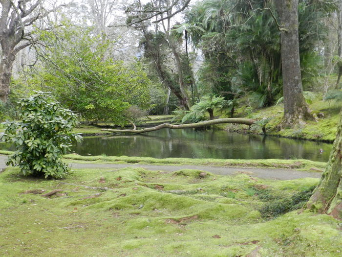 Botanic garden Terra Nostra nearby Furnas @ Azores (S. Miguel) Azores Azores Islands Botanic Garden Furnas Furnas(Azoren) Terra Nostra Park Azores, S. Miguel Beauty In Nature Branch Day Forest Grass Growth Landscape Nature No People Outdoors Plant Scenics Tranquil Scene Tranquility Tree Water