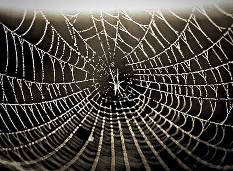 Eight-legged. Pattern Pieces Pattern Web Spider Insects  Spiderweb Spider Web Spiders Spiderworld Spider Webs Blackandwhite Black And White Black & White Blackandwhite Photography Nature Nature_collection Natute_collection Nature Photography Naturelovers