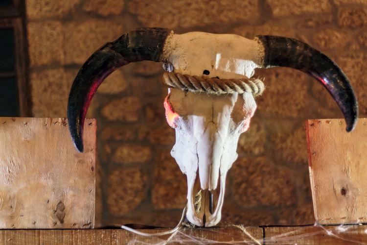 Animal skull with horns. halloween decoration