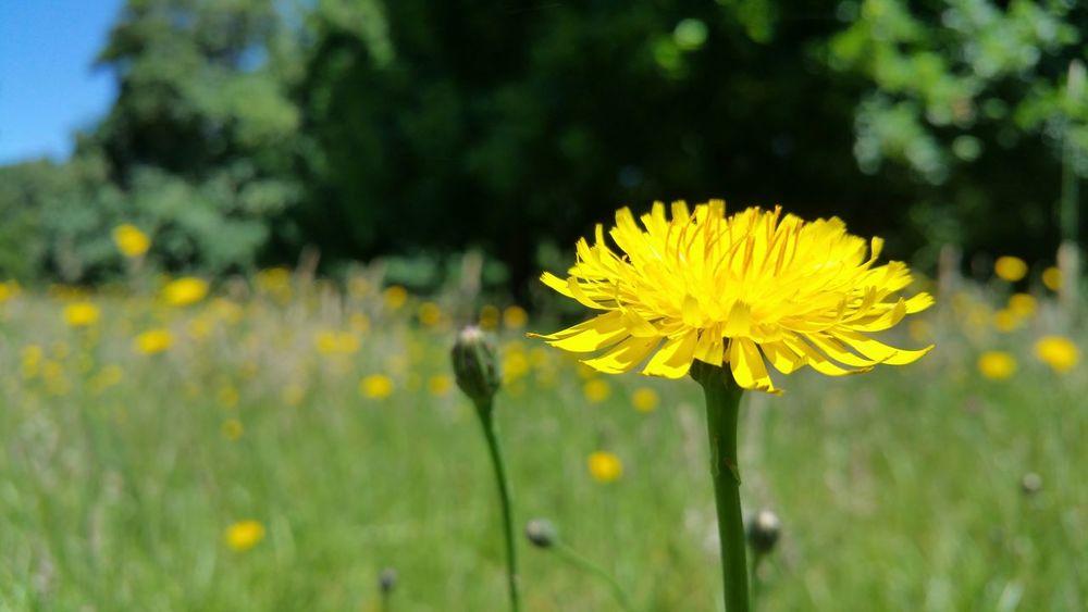 Flower Defocus Nature Yellow