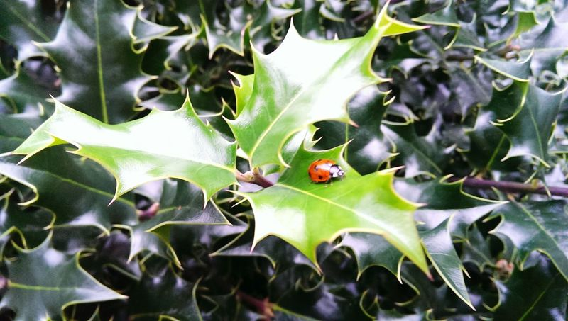 Ladybug🐞 Bridgnorth Hanging Out Colourful First Day Of Spring 1 March My Marţişor Tradition