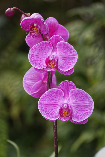 Beautiful orchid with blurred background Orchid Orchids Beauty In Nature Blooming Close-up Flower Flower Head Focus On Foreground Nature No People Petal Purple EyeEmNewHere