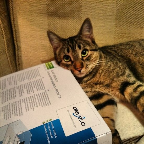 """De verdad, estoy comodísima sobre esta caja de este cacharro tan chulo..."" Igersitzi Igersanimals Igerscats XperiaZ1 plca500mbs"