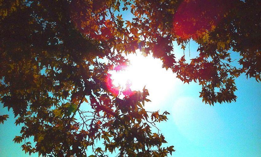 Walking Around Enjoying The Sun Soaking Up The Sun Godsbeautifulcreation Loveallmyeyemfriends Ghettyimages Taking Photos