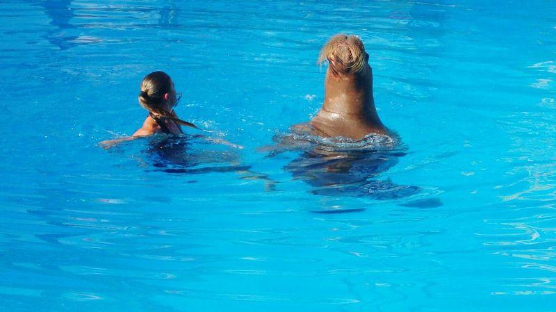 Бассейн лето морж атракцион отличное настроение радость отдыхнаприроде