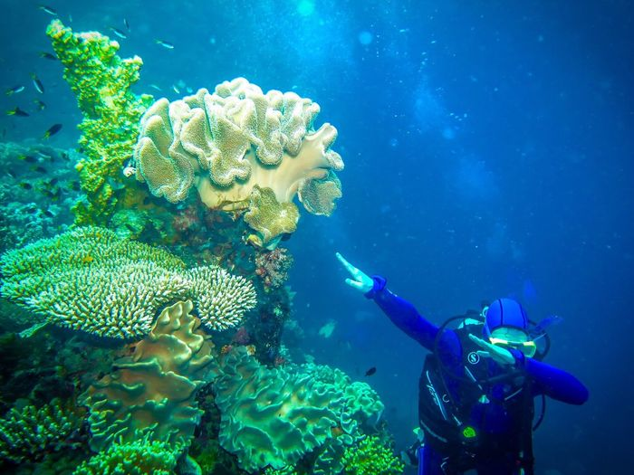 Quick dab in Great Barrier reef, Australia