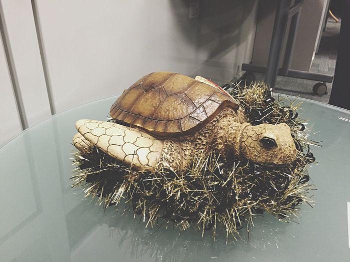 Christmas Turtle Christmas