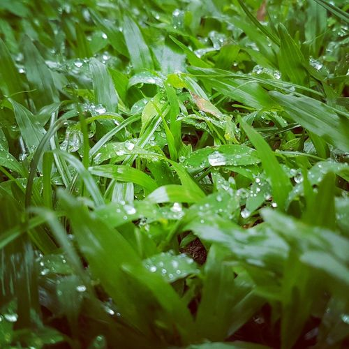Green Color Nature Close-up Grass Full Frame No People Plant Water Backgrounds Beauty In Nature Leaf Day Outdoors Freshness Fragility Animal Themes Freshness Best EyeEm Shot Close Up Beauty In Nature Dewdrops In The Garden Dewdrops On Grass Dew
