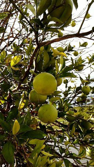 Delucious Orange Lime Creation Of God !