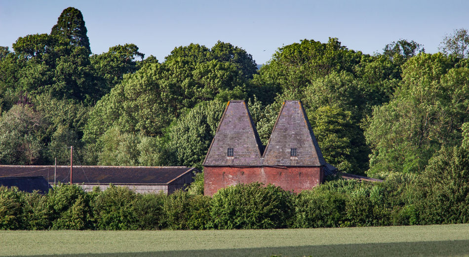 Oast House, Garden Of England, Kent, England. Architecture Sky Built Structure Nature No People Plant Hops Beer Brewing Iconic Buildings Vivid International Getty Images EyeEm Gallery Travel Destinations Tourism Sunrise Countryside Rural Scene History Tree Growth Green Color Day Beauty In Nature Tranquility Tranquil Scene Land Outdoors Scenics - Nature Forest Foliage Lush Foliage Idyllic
