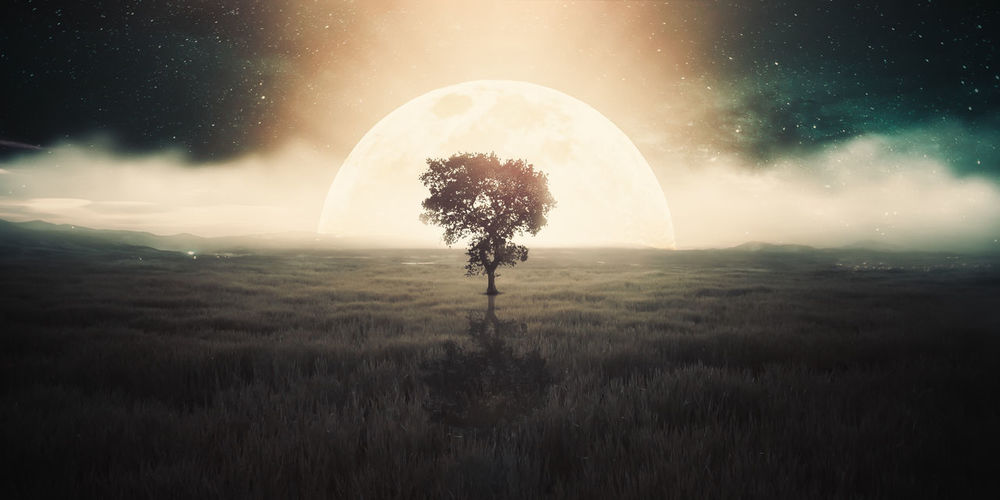 Astronomy Beauty In Nature Digital Composite Environment Field Grass Land Landscape Nature Night Non-urban Scene One Person Outdoors Plant Scenics - Nature Silhouette Sky Star - Space Tranquil Scene Tranquility Tree