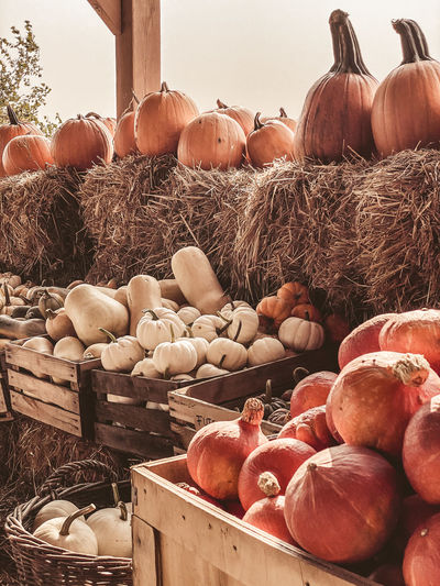 Stack of pumpkins in farm