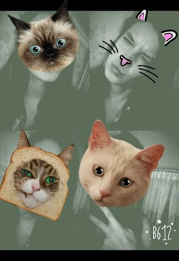 Полная тп:) котикиправятмиром кошки Катюха