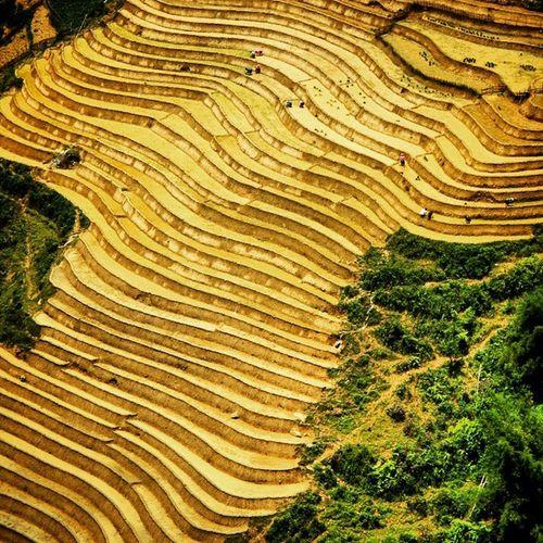 Sapa Rice Paddies Sapa Ricepaddies Traditional Trekking Travel View Valley Vietnam